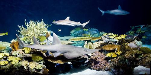 50% Off Shedd Aquarium Promo Codes & Coupons - September 2020